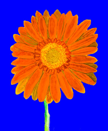 orange gerbera: Orange gerbera flower on blue background, watercolor painting. Stock Photo