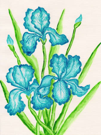 sm: Three blue irises, hand painted picture, watercolours. Size of original 29,5 x 21 sm.