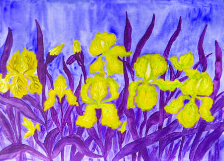 flower bed: Hand painted picture, watercolours, flower bed with many yellow irises on blue background.