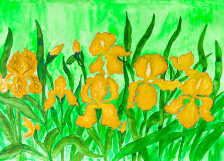 flower bed: Hand painted picture, watercolours, flower bed with many yellow irises on greenbackground.