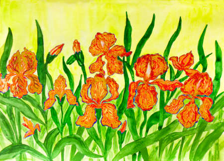 flower bed: Hand painted picture, watercolours, flower bed with many orange irises on yellow background.