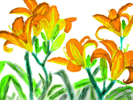 watercolour: Hand drawn picture, watercolour - orange-yellow lilies.