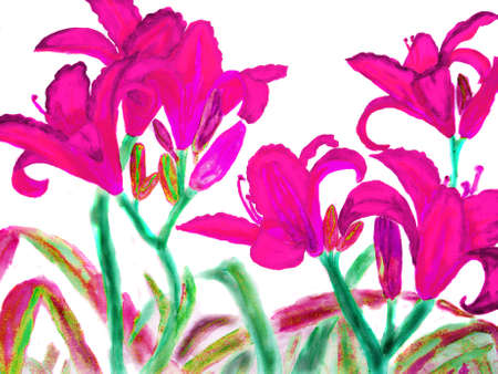 sm: Hand drawn picture, watercolour - few red lilies. Size of original 40,5 x 30,5 sm. Stock Photo
