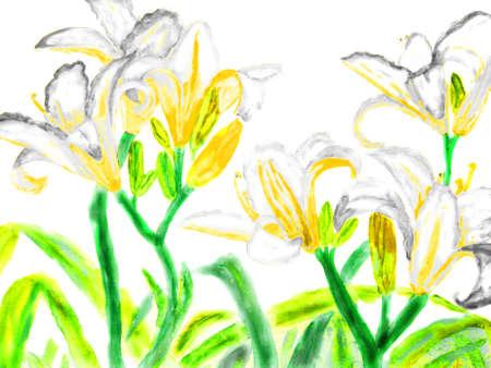 watercolour: Hand drawn picture, watercolour - white lilies.