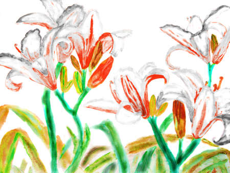 watercolour: Hand drawn picture, watercolour - white-red lilies. Stock Photo