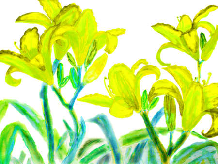 watercolour: Hand drawn picture, watercolour - yellow lilies.