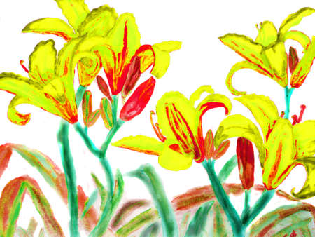 watercolour: Hand drawn picture, watercolour - yellow-red lilies.