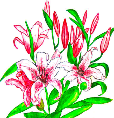 sm: Hand painted picture, watercolours - two pink lilies on white background. Size of original 30 x 28 sm.