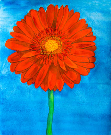nature one painted: Red gerbera flower on blue background, watercolor painting.