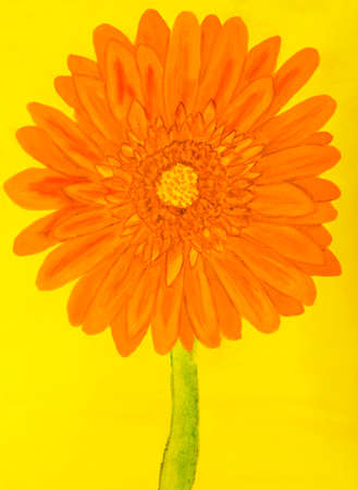 creative arts: Orange gervera flower on yellow background, painting in watercolours