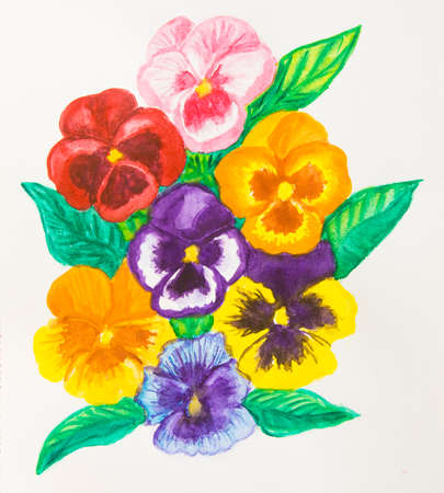 viola: Composition with few pansies (viola tricolor) on white background, watercolour painting