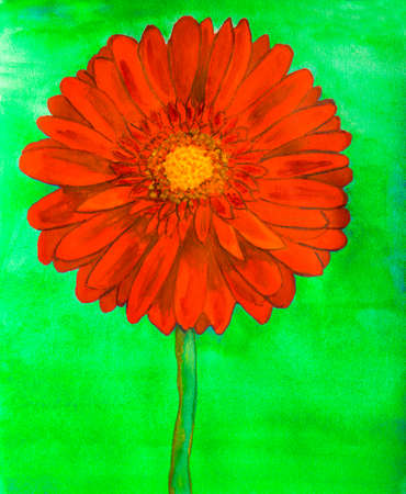 nature one painted: Red gerbera flower on green background, watercolor painting.