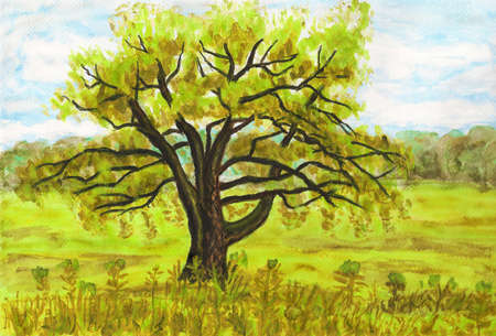 big size: Hand painted picture watercolours - big Willow tree on green meadow. Size of original 29,5 x 20 sm.