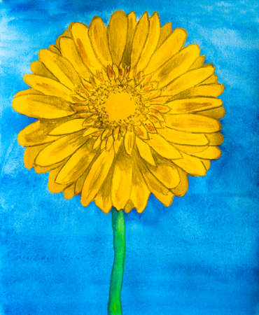 nature one painted: Yellow gerbera flower on blue background, watercolor painting.
