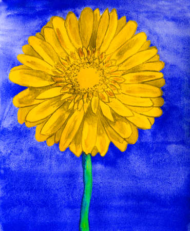 gerbera: Yellow gerbera flower on blue background, watercolor painting.