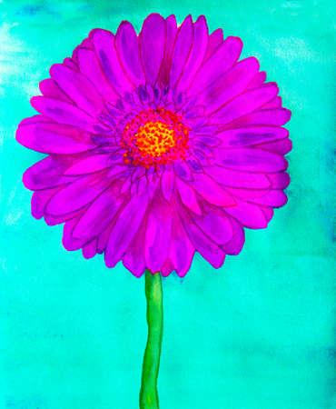 gerbera: Purple gerbera flower on turguoise background, watercolor painting.