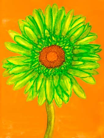 Green gerbera on orange background.