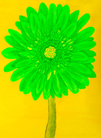 nature one painted: Green gervera flower on yellow background, painting in watercolours