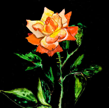 gloria: Hand painted picture, watercolours - rose mixed yellow and red colours, kind Gloria Dei, another name Peace rose.