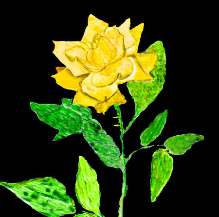 yellow rose: Hand painted picture, watercolours - yellow rose on black. Stock Photo