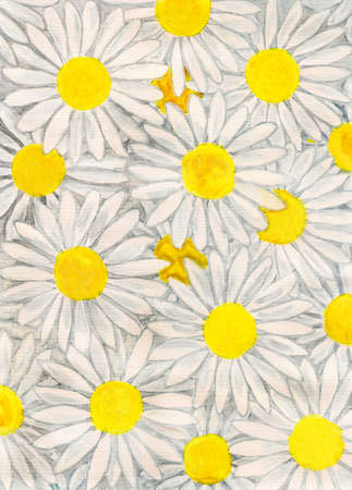 oxeye: White camomiles - ox-eye daisy, hand painted picture, gouache. Stock Photo
