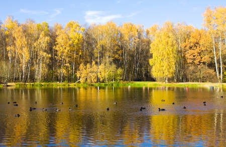 Autumn landscape with lake and yellow birch forest on bank, recorded on Red lake in Izmaylovsky park, Moscow.