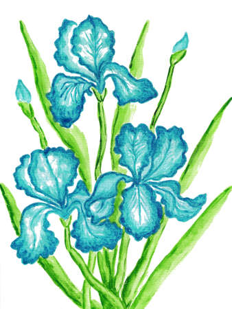Three blue irises, hand painted picture, watercolours. Size of original 29,5 x 21 sm