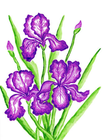 Three purple irises, hand painted picture, watercolours. Size of original 29,5 x 21 sm