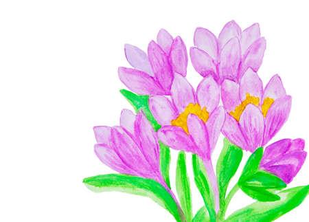Purple crocuses, painting