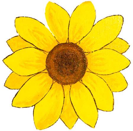 흰색 배경 - 그림 페인팅 아크릴에 하나의 노란 해바라기.