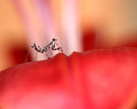 praying mantis: Baby Praying Mantis