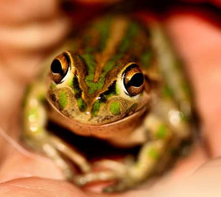 smiling frog: Smiling Frog
