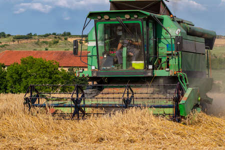 Front view of an old combine harvester working on a wheat field. Agriculture and harvesting concept.