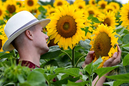 Young farmer standing in sunflower field and examining the crop. Agriculture and harvesting concept.