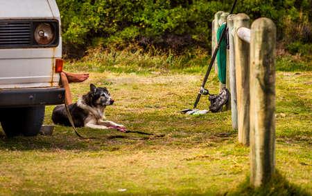 Tomando un descanso de la pesca con piedras. Un hombre y su perro Foto de archivo - 89217282