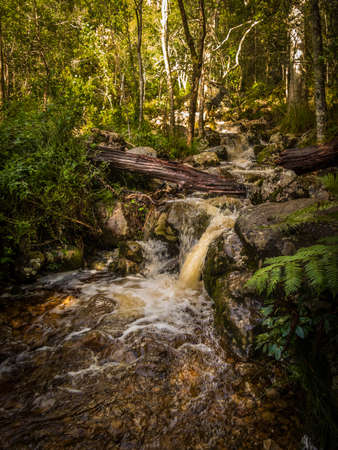 A mountain stream tumbles over rocks as it flows to thre sea. Newlands Forest, Cape Town, South Africa.