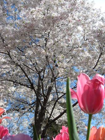 Spring Flowers Stok Fotoğraf