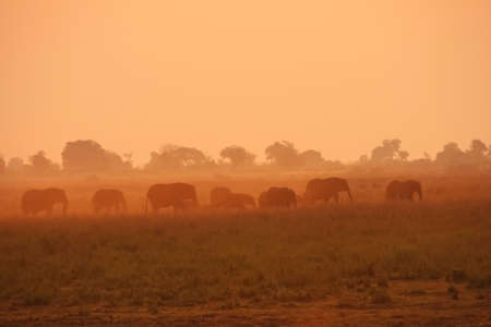 silhouettes of elephants during golden hour in Chobe National Park, Botswana