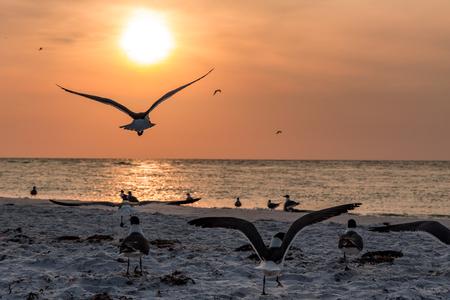 Seagulls on a beach in Florida Stockfoto
