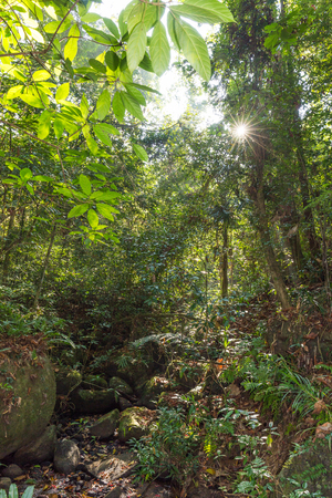 Sinharaja rainforest on Sri Lanka