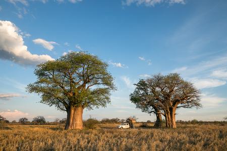 Camping at Baines Baobab in Botswana