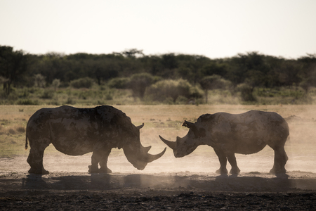 Two rhino silhouettes at Khama Rhino Sanctuary in Botswana Stockfoto