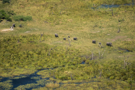 Elephants in the Okavango Delta shot while doing a scenic flight