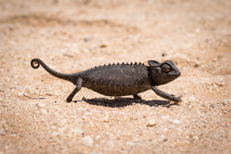 A black chameleon in the Namib desert Stockfoto