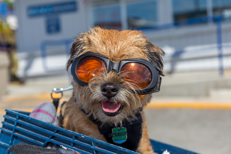 This cute dog was sitting in a basket on the back of a moped