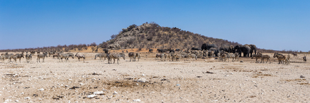 A gathering of many African animals at a waterhole in the Etosha National Park