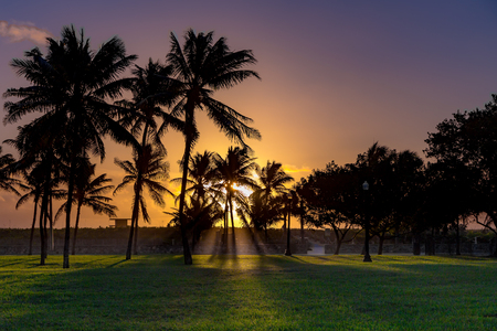 The first sunrays between Palm trees at Miami Beach Stockfoto