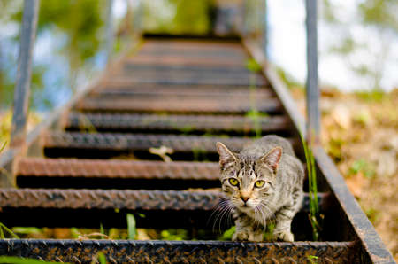 curiously: Cat standing on metal steps curiously looking at the camera. The Cat is focused with the steps behind going out of focus. Stock Photo