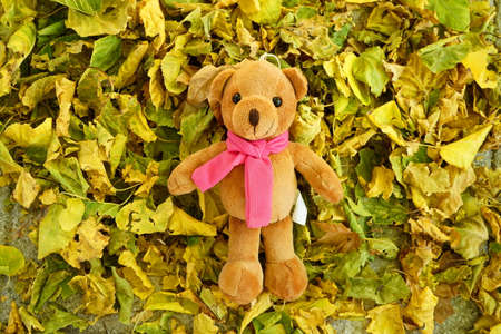 Teddy bear laying down over the leafs in the garden in autumn. Stock Photo