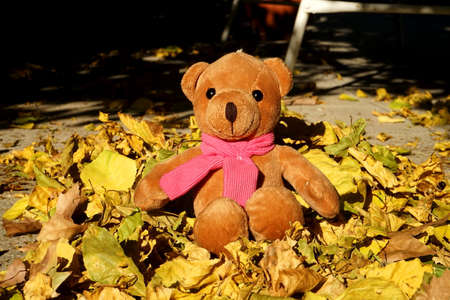 Teddy bear sitting down over the leafs in the garden in autumn. Stock Photo